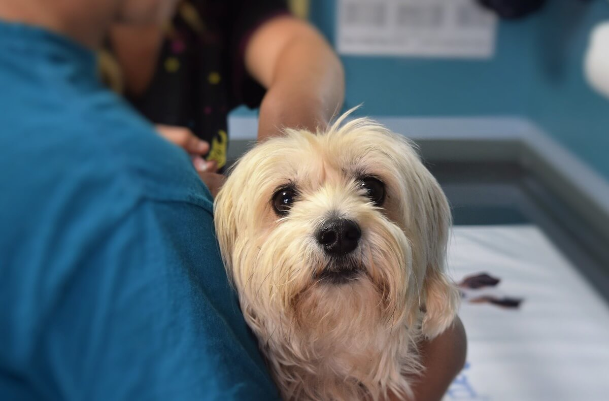 Why Should You Vaccinate Your Pet?