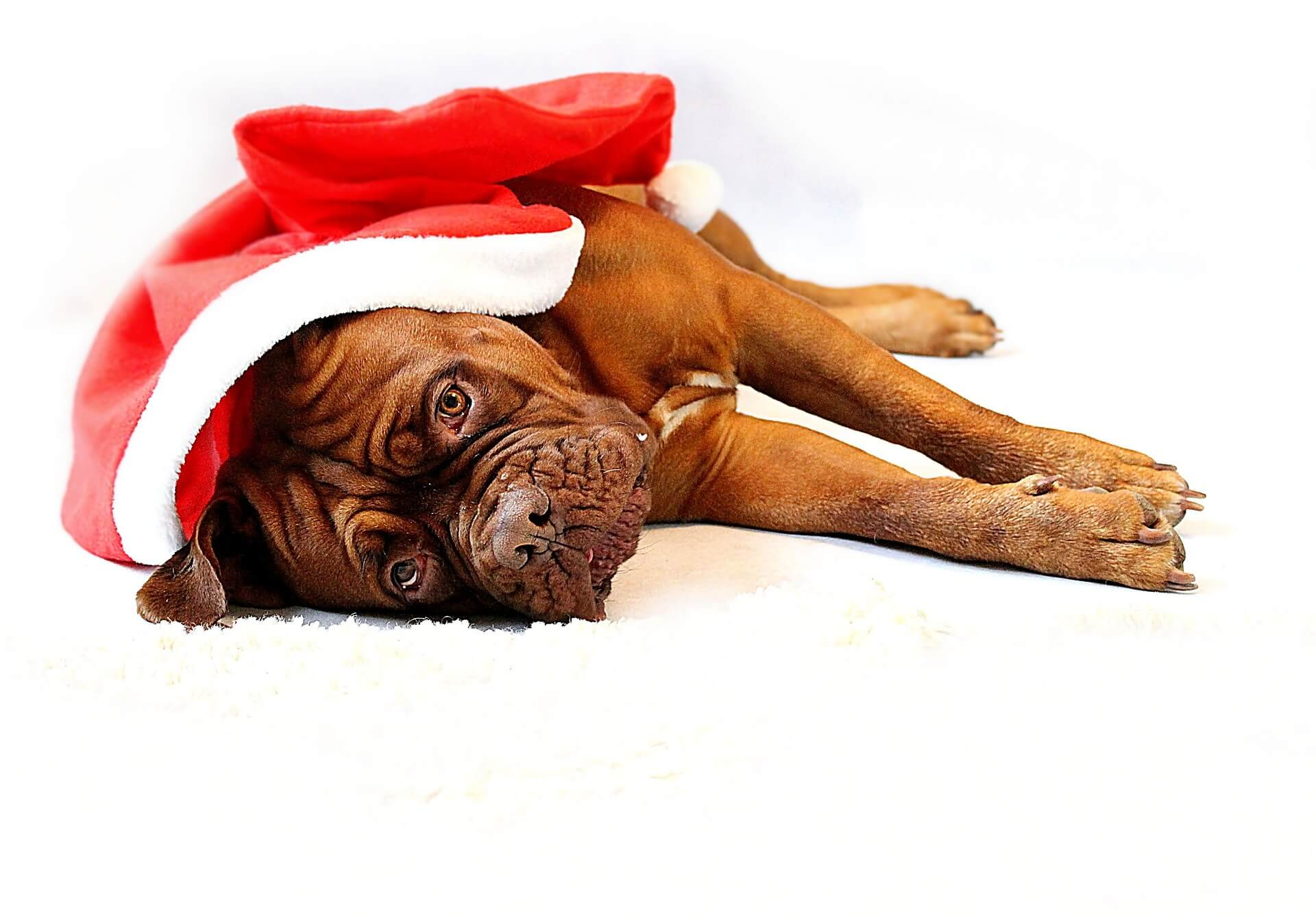 Avoid Overfeeding Your Pet During the Holidays