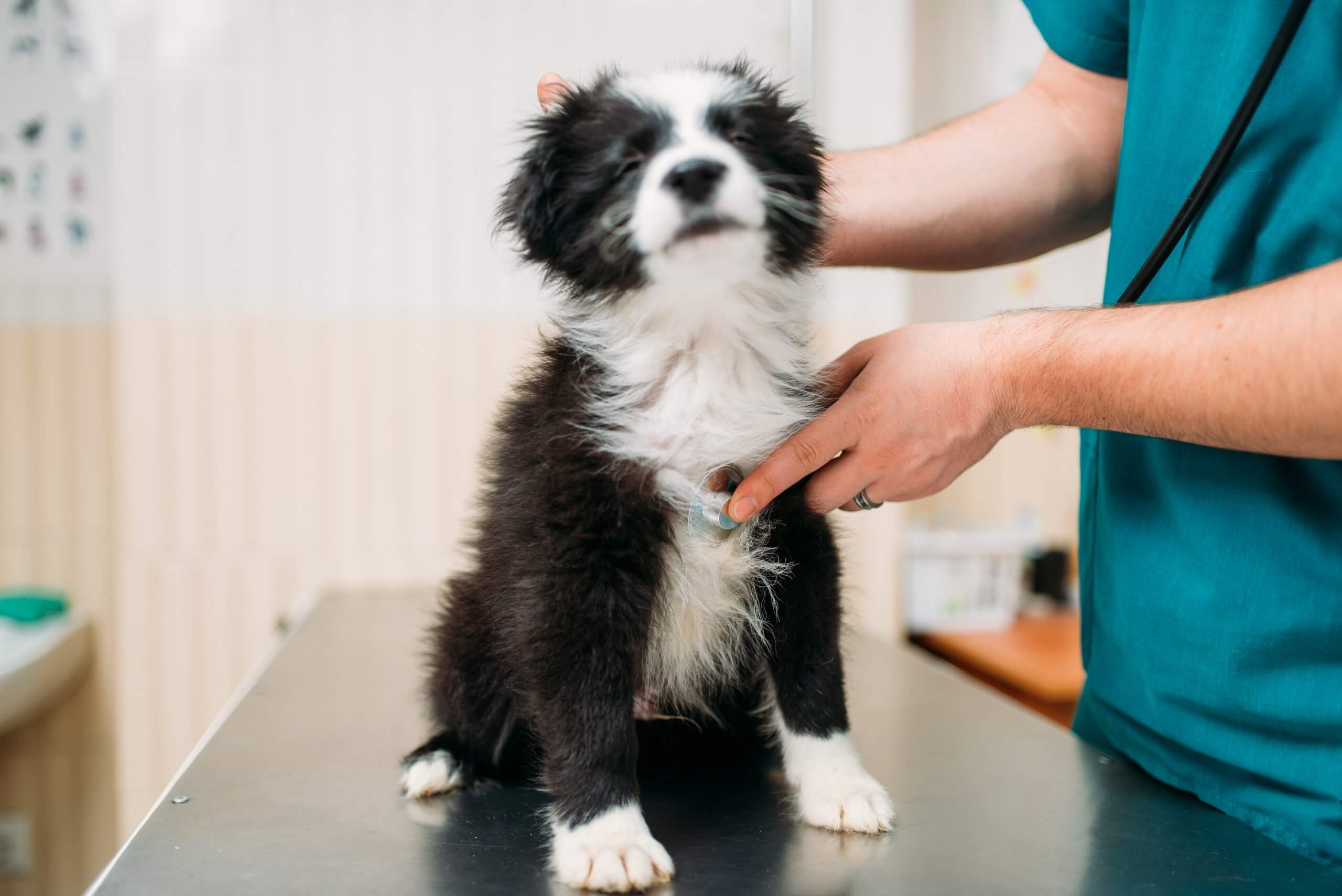 What To Know About the Dog Flu