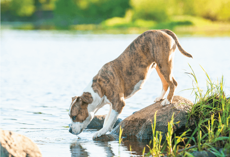 Louisiana Leads the Country In Heartworm
